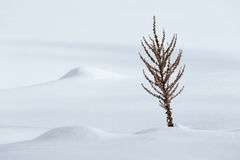 Εγκαταστάσεις το χειμώνα Στοκ Φωτογραφίες