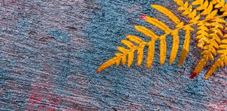 Εγκαταστάσεις φτερών στην περικοπή ξύλινη Στοκ Εικόνες
