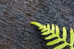 Εγκαταστάσεις φτερών στο κομμένο ξύλο Στοκ Φωτογραφίες