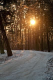 Εγκαταστάσεις φωτογραφιών που παγώνουν από τον παγετό Στοκ εικόνες με δικαίωμα ελεύθερης χρήσης
