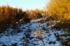 Εγκαταστάσεις Apiaceae το φθινόπωρό του Στοκ φωτογραφία με δικαίωμα ελεύθερης χρήσης