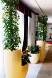 Εγκαταστάσεις flowerpots Στοκ Φωτογραφία