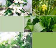 Εγκαταστάσεις Grean με το κολάζ λουλουδιών στοκ εικόνες με δικαίωμα ελεύθερης χρήσης