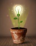Εγκαταστάσεις Lightbulb που βγαίνουν από flowerpot Στοκ Εικόνα