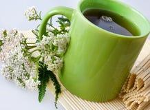 Εγκαταστάσεις millefolium Achillea με τα λουλούδια/το φρέσκο Yarrow τσάι Στοκ εικόνα με δικαίωμα ελεύθερης χρήσης