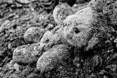 Εγκαταλειμμένα teddy ψέματα καλυμμένη από τις γκρίζες τέφρες στοκ φωτογραφία