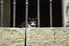 εγκαταλειμμένη γάτα Στοκ Φωτογραφία