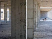 εγκαταλειμμένος ανελ&kappa Στοκ Εικόνα