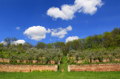 Εγκαταλειμμένος παλαιός κήπος aplle στα πεζούλια Στοκ εικόνα με δικαίωμα ελεύθερης χρήσης