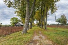 Εγκαταλειμμένος δρόμος στο παλαιό αγροτικό σπίτι, Λετονία, Ευρώπη Στοκ εικόνες με δικαίωμα ελεύθερης χρήσης