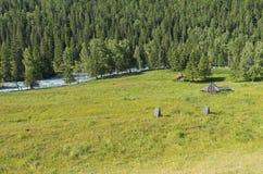 Εγκαταλειμμένο βοοειδές-αγρόκτημα στην όχθη ποταμού Βουνά Altai, Ρωσία στοκ εικόνα