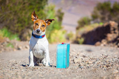 Εγκαταλειμμένο και χαμένο σκυλί Στοκ Φωτογραφία
