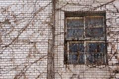 Εγκαταλειμμένο κτήριο με το ξηρό αναρριχητικό φυτό Στοκ Φωτογραφία