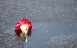 Εγκαταλειμμένο λουλούδι Στοκ εικόνα με δικαίωμα ελεύθερης χρήσης