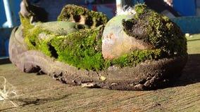 Εγκαταλειμμένο παπούτσι, ξεχασμένο παπούτσι Στοκ Εικόνα