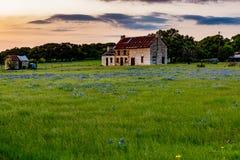 Εγκαταλειμμένο παλαιό σπίτι στο Τέξας Wildflowers Στοκ Φωτογραφία