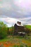 εγκαταλειμμένο σιτάρι αν Στοκ φωτογραφία με δικαίωμα ελεύθερης χρήσης