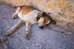 Εγκαταλειμμένο σκυλί που βρίσκεται στο έδαφος με τα λυπημένα μάτια Στοκ Φωτογραφίες