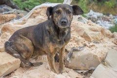 Εγκαταλειμμένο σκυλί 2 στοκ φωτογραφίες