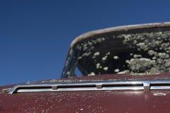 Εγκαταλελειμμένο αυτοκίνητο με το βρύο Στοκ φωτογραφία με δικαίωμα ελεύθερης χρήσης
