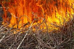 Εγκαύματα μιας μεγάλα πυρκαγιάς πυρκαγιάς σε έναν κλάδο Στοκ εικόνα με δικαίωμα ελεύθερης χρήσης