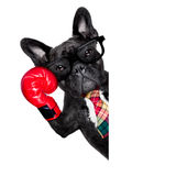Εγκιβωτίζοντας σκυλί Στοκ φωτογραφία με δικαίωμα ελεύθερης χρήσης