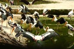 Εγκλωβισμένο πουλί φτερών στοκ εικόνες