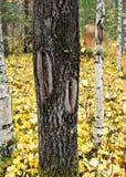 Εγκοπές στο μίσχο Στοκ φωτογραφίες με δικαίωμα ελεύθερης χρήσης
