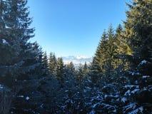 Εγκοπή βουνών σε Karpatian Στοκ φωτογραφία με δικαίωμα ελεύθερης χρήσης