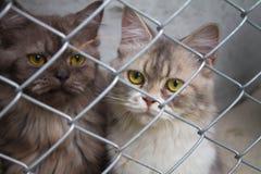 εγκλωβίστε τη γάτα Στοκ Φωτογραφία