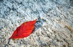 Εγχώρια εθνική ιστορική περιοχή του Carl Sandburg Στοκ φωτογραφίες με δικαίωμα ελεύθερης χρήσης