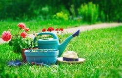 Εγχώρια καλλιεργώντας και λουλούδι-αυξανόμενη ακόμα-ζωή του λουλουδιού Στοκ Φωτογραφίες