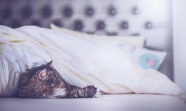 Εγχώρια σκηνή στην κρεβατοκάμαρα, γάτα στο κρεβάτι Στοκ φωτογραφία με δικαίωμα ελεύθερης χρήσης