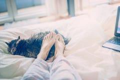 Εγχώρια σκηνή στο κρεβάτι Θηλυκά πόδια που βρίσκονται σε μια γάτα ύπνου Στοκ Φωτογραφίες