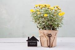 Εγχώριο γλυκό σπίτι - όμορφα λουλούδια στο δοχείο με την κάρτα μηνυμάτων Στοκ φωτογραφία με δικαίωμα ελεύθερης χρήσης