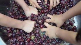 Εγχώριο κρασί φρούτων σταφυλιών που επεξεργάζεται τη λεπτομερή συντριβή των φρούτων με πολλά νέα θηλυκά γυμνά χέρια απόθεμα βίντεο