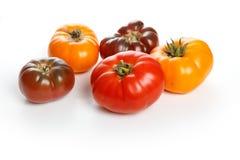 Εγχώριο ντομάτα Στοκ Εικόνες