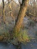 εδάφη υγρά στοκ φωτογραφία με δικαίωμα ελεύθερης χρήσης