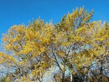 Εδώ είναι και το φθινόπωρο ήρθε στοκ εικόνες
