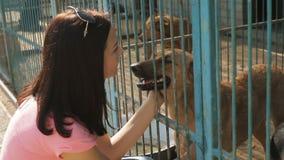 Εθελοντής κοριτσιών στο βρεφικό σταθμό για τα σκυλιά καταφύγιο σκυλιών περιπ&lam απόθεμα βίντεο
