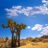 Εθνική έρημος Καλιφόρνια Mohave κοιλάδων Yucca πάρκων δέντρων του Joshua Στοκ Εικόνα