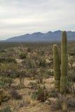 Εθνική ανατολή πάρκων Saguaro του Tucson Στοκ φωτογραφίες με δικαίωμα ελεύθερης χρήσης