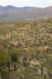 Εθνική ανατολή πάρκων Saguaro Στοκ φωτογραφία με δικαίωμα ελεύθερης χρήσης