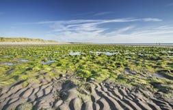 Εθνική επιφύλαξη φύσης Ynyslas στη βόρεια Ουαλία στοκ φωτογραφία με δικαίωμα ελεύθερης χρήσης