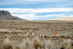 Εθνική επιφύλαξη BLANCA αλυκών Υ Aguada στο Περού Στοκ Εικόνα