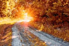 Εθνική οδός στο δάσος φθινοπώρου στον ήλιο στοκ εικόνες
