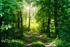 Εθνική οδός στο θερινό δάσος στοκ εικόνα με δικαίωμα ελεύθερης χρήσης