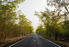 Εθνική οδός ασφάλτου στο πράσινο δάσος Στοκ εικόνα με δικαίωμα ελεύθερης χρήσης
