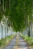 Εθνική οδός στην Προβηγκία Στοκ φωτογραφίες με δικαίωμα ελεύθερης χρήσης