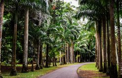 Εθνικός βοτανικός κήπος του Μαυρίκιου Στοκ Φωτογραφίες